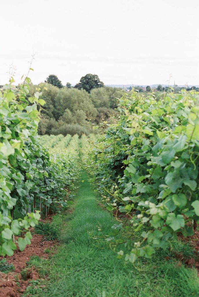 Hencote Estate Vineyard in Shrewsbury